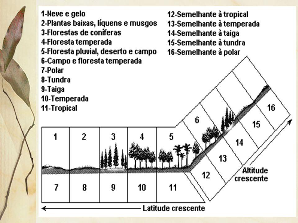 2.3 Altitude A distribuição da vegetação em altitude segue uma ordem equivalente à distribuição em latitude. Assim, em uma montanha, localizada em uma