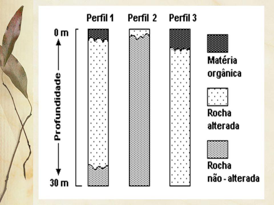2.5 Solos (pedologia) Os solos influenciam e são influenciados pela vegetação. Por exemplo: sua manutenção depende da cobertura vegetal que o recobre
