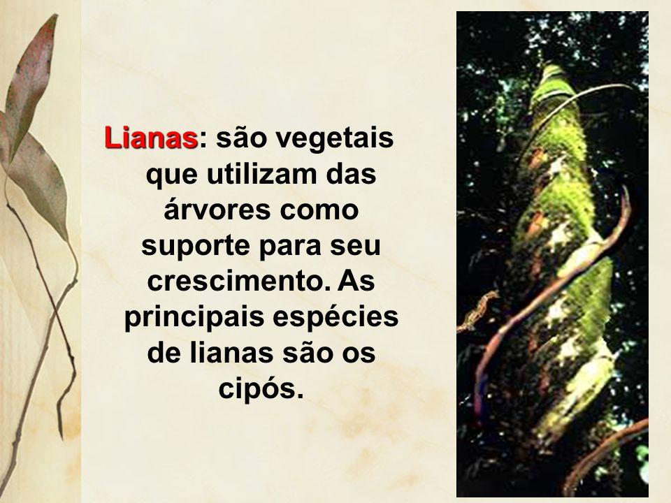 Epífitas: são vegetais que utilizam das árvores como suporte para seu crescimento, não sendo parasita. As principais espécies são as orquídeas e a bro