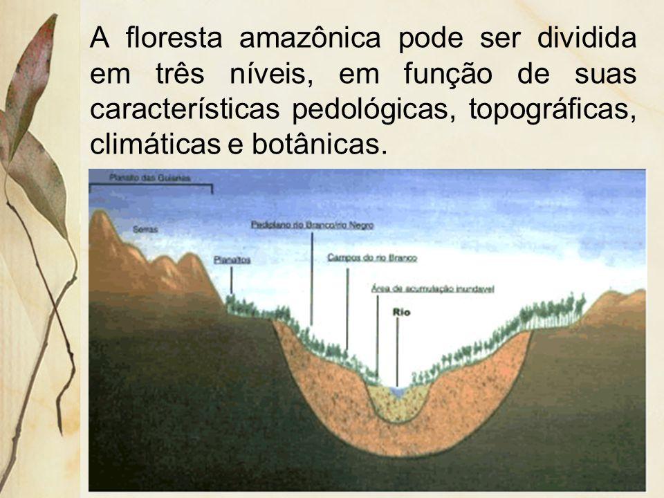 Lianas: Lianas: são vegetais que utilizam das árvores como suporte para seu crescimento. As principais espécies de lianas são os cipós.