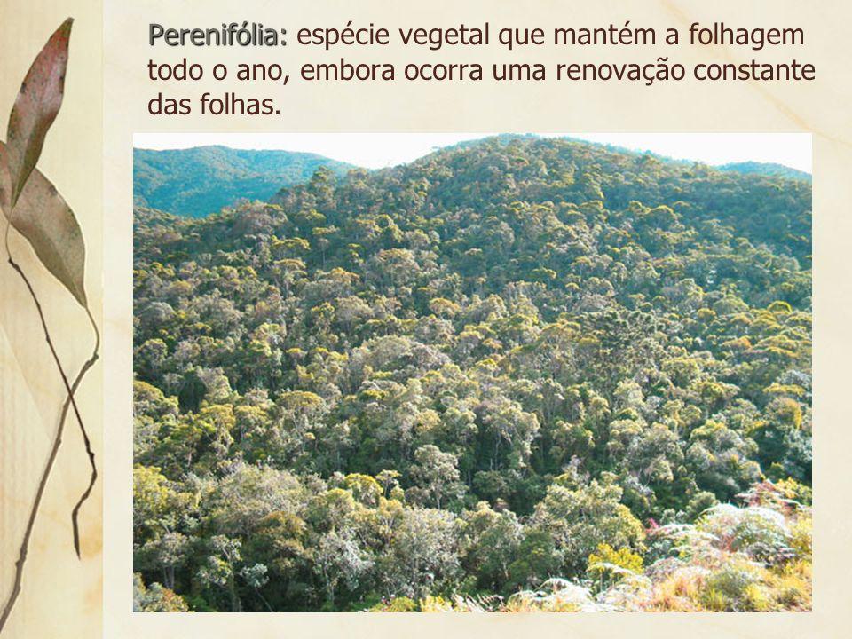 3.8 Florestas de Coníferas Também pode ser denominada de Taiga.