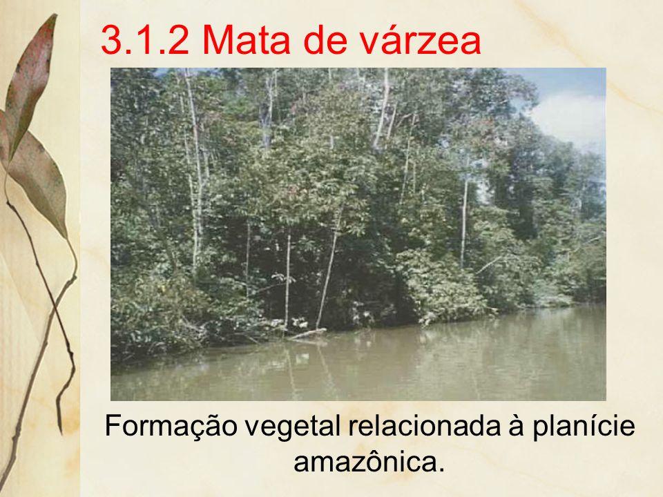 3.1.1 Mata de Terra Firme Ocorre na área dos baixos platôs, região a salvo das inundações do R. Amazonas. A principal espécie é a castanheira. Além de