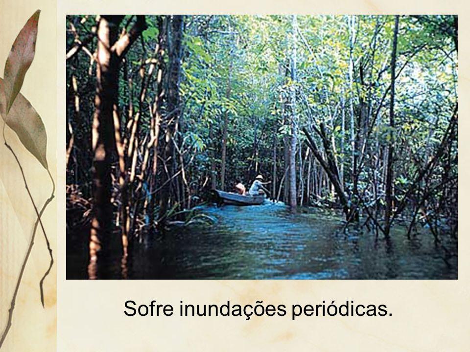 3.1.2 Mata de várzea Formação vegetal relacionada à planície amazônica.