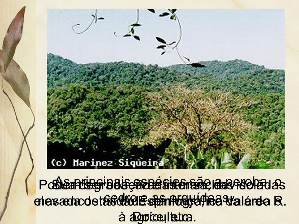 3.2.1 Floresta Tropical do Interior Também denominada de floresta semi- úmida. É área do clima do tropical, fato que explica a presença de algumas esp