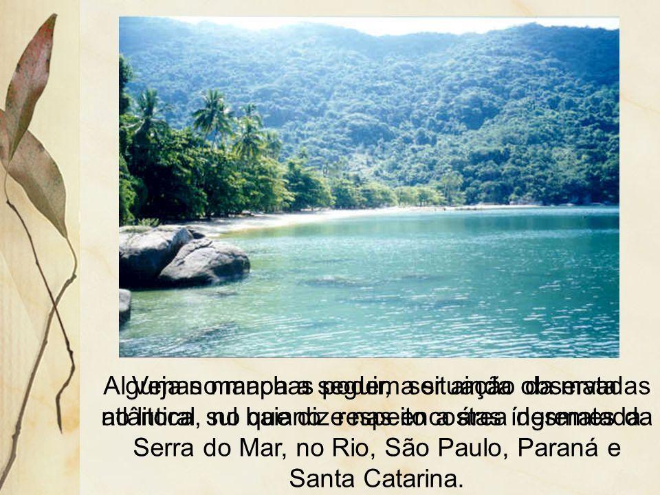 3.2.2 Mata Atlântica Ocorre próxima ao litoral, desde o Rio Grande do Norte até o Rio Grande do Sul. A grande densidade populacional e a atividade agr
