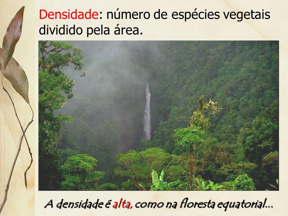 Epífitas: são vegetais que utilizam das árvores como suporte para seu crescimento, não sendo parasita.