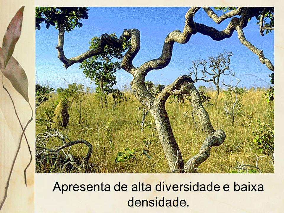 Apresenta dois estratos: um herbáceo, descontínuo, formando tufos, e outro arbóreo-arbustivo.