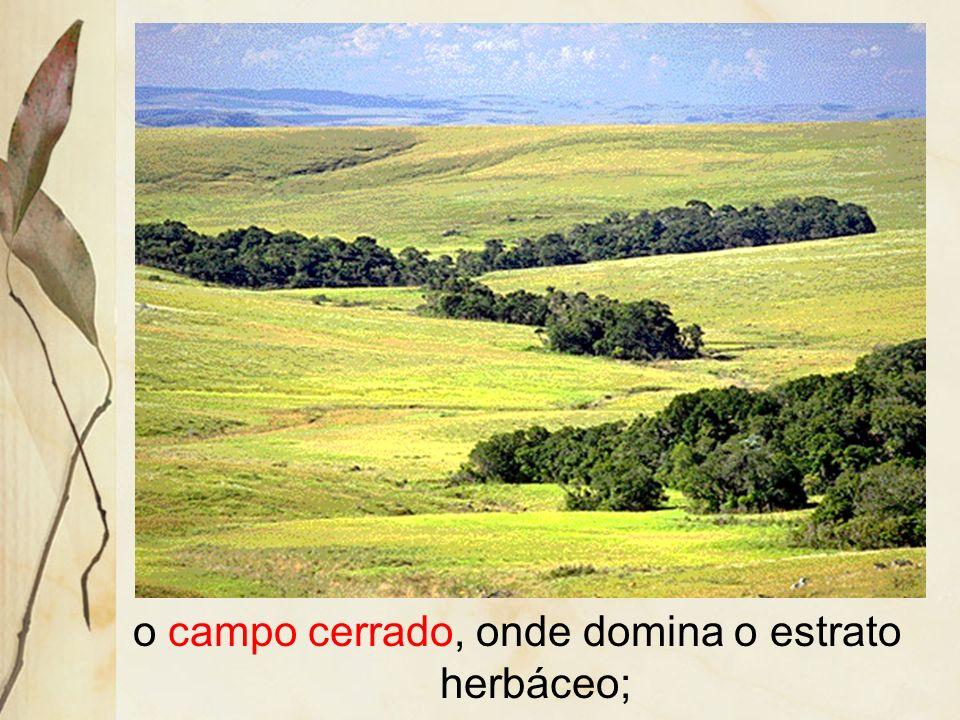 O cerrado apresenta-se com três variações fisionômicas: