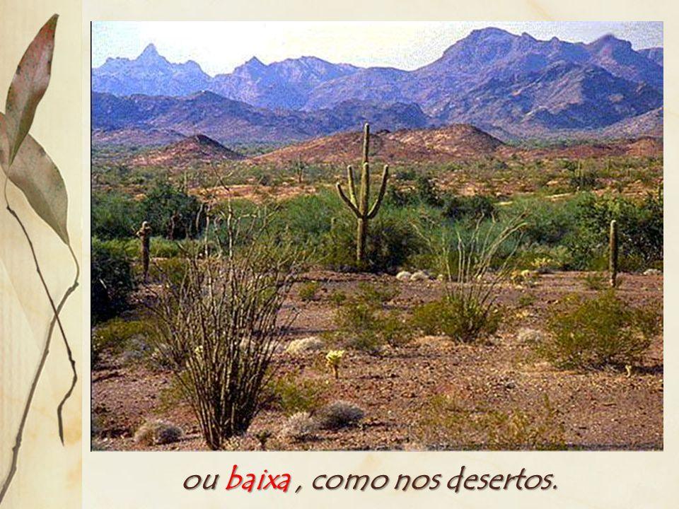 A densidade é alta, como na floresta equatorial... Densidade: número de espécies vegetais dividido pela área.