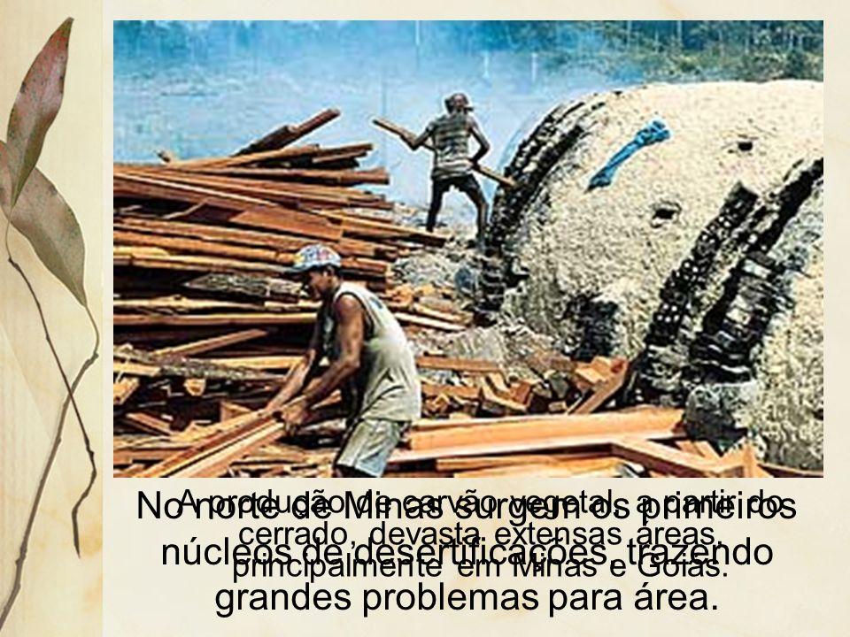 A ocupação do cerrado pelas frentes pioneiras agrícolas é realizada de forma desordenada e predatória. Queimadas extensas para limpar o solo ou para f