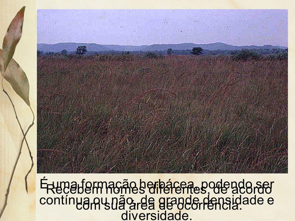 3.4 Campos Ocorrem no clima continental e nas áreas de transição para a zona térmica temperada.