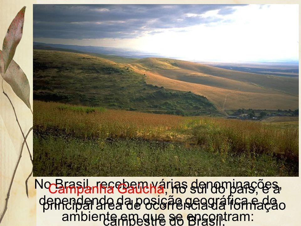 As principais áreas campestres são: os pampas argentinos e uruguaios e do sul do Brasil; as pradarias dos Estados Unidos e Canadá; as estepes da Europ