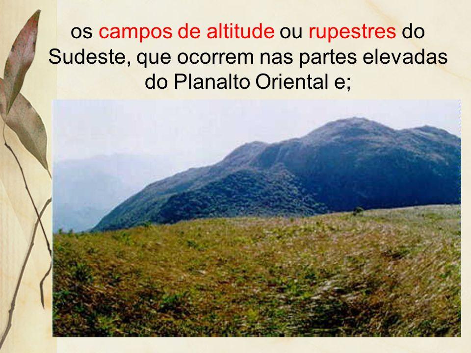 No Brasil, recebem várias denominações, dependendo da posição geográfica e do ambiente em que se encontram: Campanha Gaúcha, no sul do país, é a princ