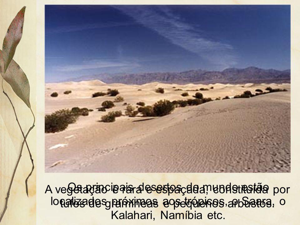 3.5 Desertos e semi-dese rtos Ocorrem em áreas de clima quente e com estação seca prolongada.