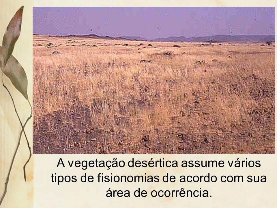 A vegetação é rara e espaçada, constituída por tufos de gramíneas e pequenos arbustos. Os principais desertos do mundo estão localizados próximos aos