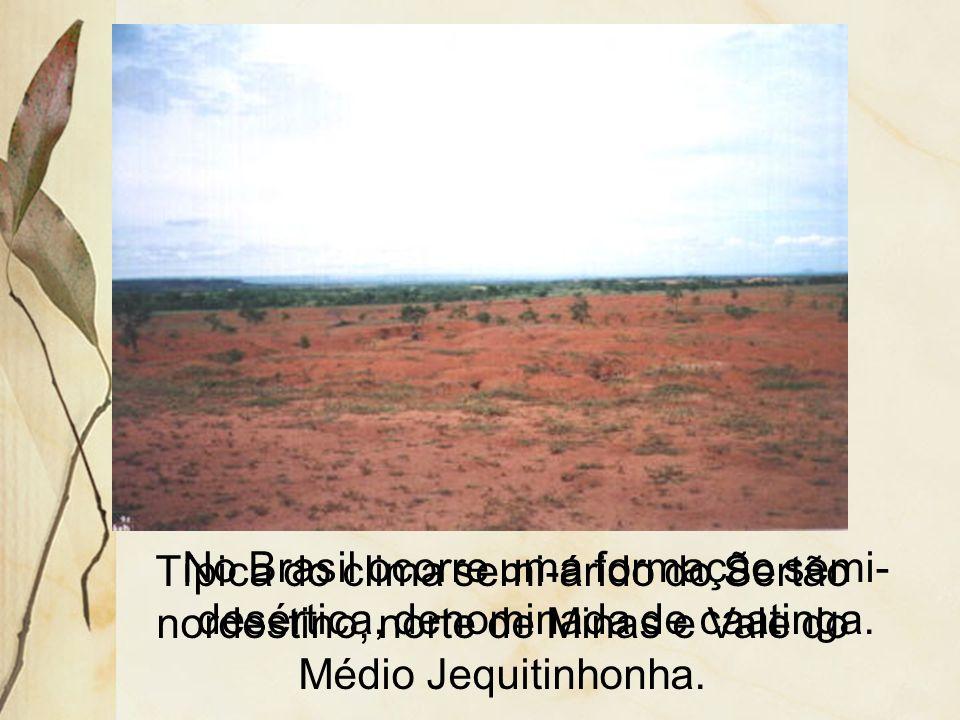 A escassez de chuvas impõe o xeromorfismo, isto é, adaptações que o vegetal adquire em função do ambiente seco. Entre elas, tem-se: presença de espinh