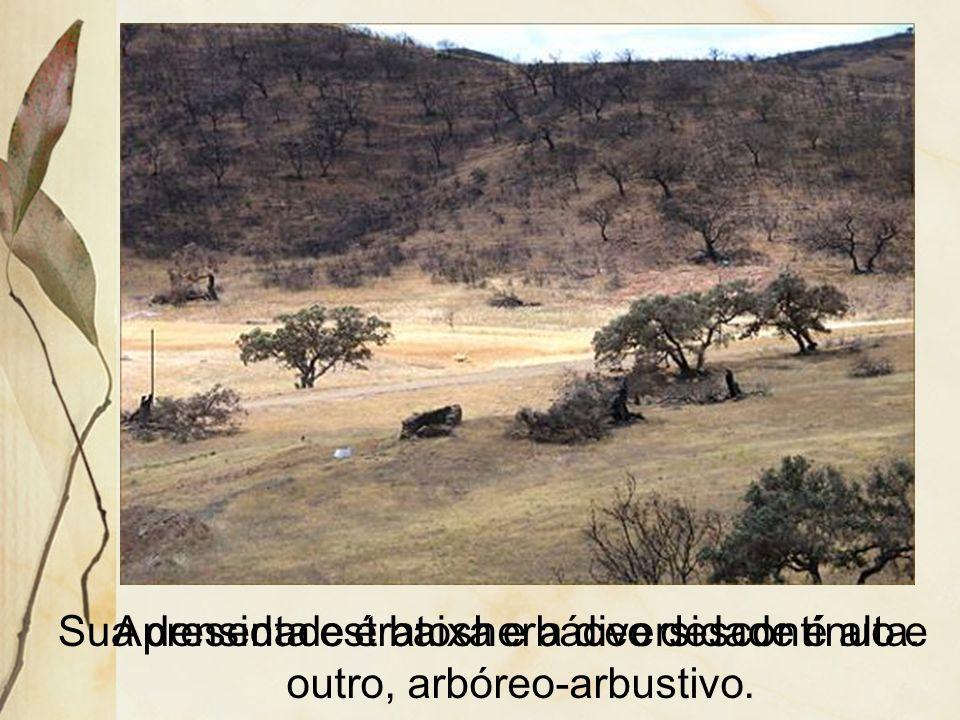 No Brasil ocorre uma formação semi- desértica, denominada de caatinga. Típica do clima semi-árido do Sertão nordestino, norte de Minas e Vale do Médio
