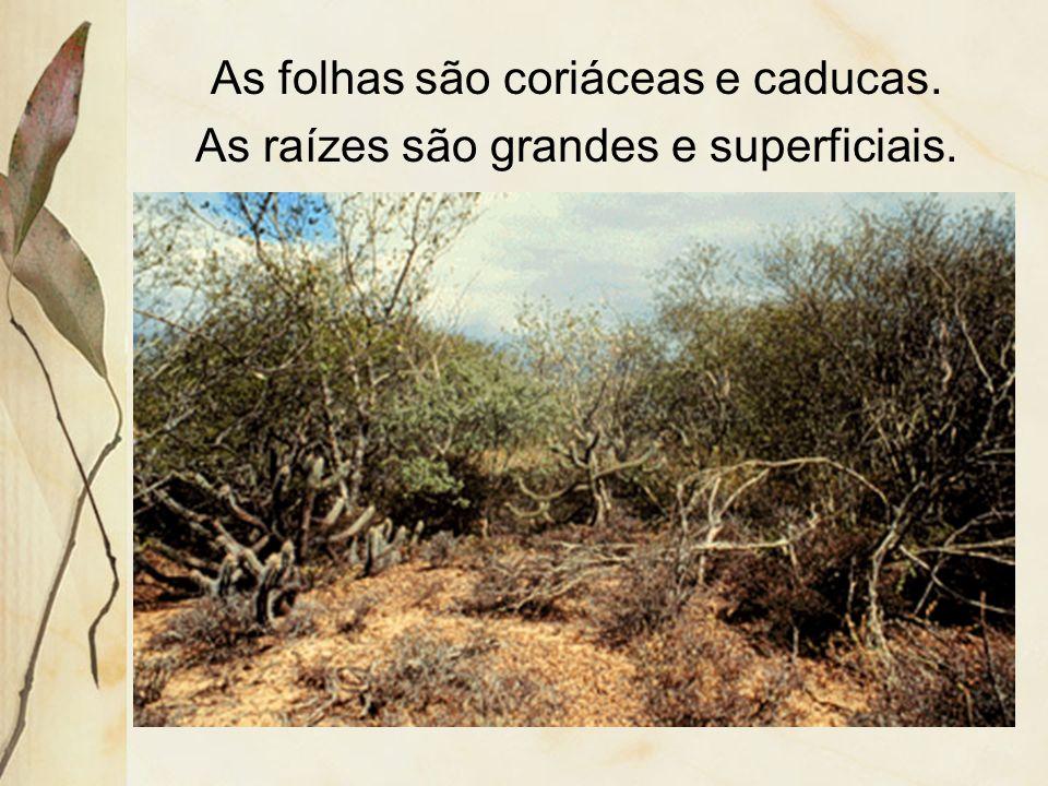 Apresenta estratosherbáceo descontínuo e outro, arbóreo-arbustivo. Sua densidade é baixa e a diversidade é alta.