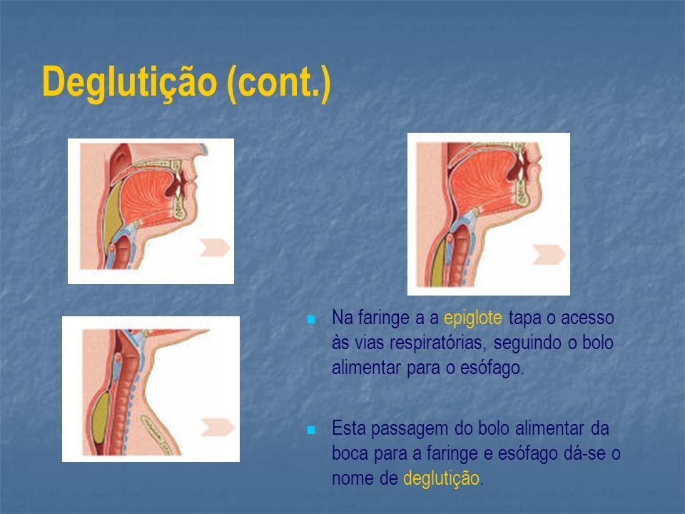 Deglutição (cont.) Na faringe a a epiglote tapa o acesso às vias respiratórias, seguindo o bolo alimentar para o esófago. Esta passagem do bolo alimen