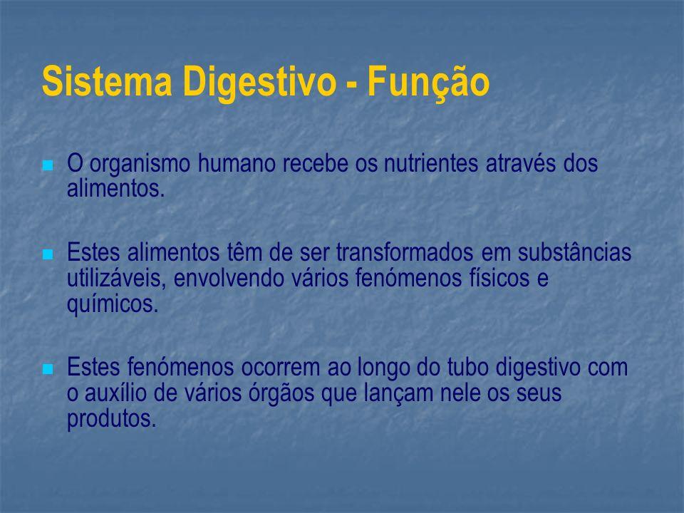 Sistema Digestivo - Função O organismo humano recebe os nutrientes através dos alimentos. Estes alimentos têm de ser transformados em substâncias util