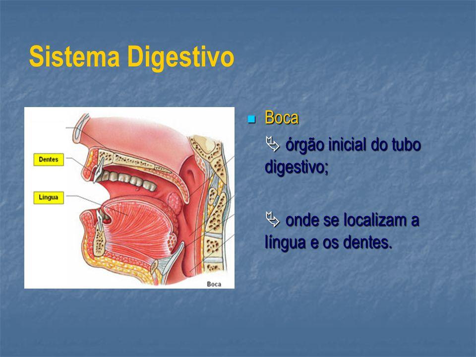 Sistema Digestivo Boca Boca órgão inicial do tubo digestivo; órgão inicial do tubo digestivo; onde se localizam a língua e os dentes. onde se localiza