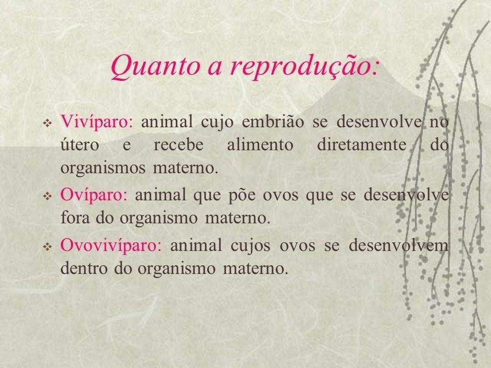 Quanto a reprodução: Vivíparo: animal cujo embrião se desenvolve no útero e recebe alimento diretamente do organismos materno. Ovíparo: animal que põe