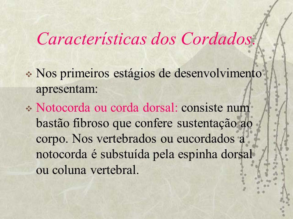 Características dos Cordados.