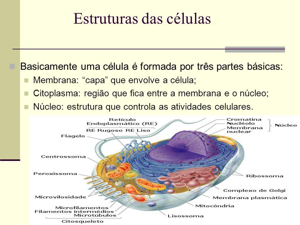 Estruturas das células Basicamente uma célula é formada por três partes básicas: Membrana: capa que envolve a célula; Citoplasma: região que fica entr