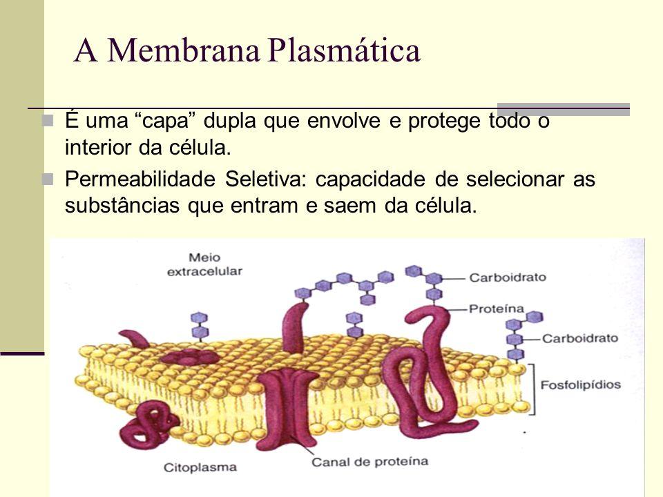 A Membrana Plasmática É uma capa dupla que envolve e protege todo o interior da célula. Permeabilidade Seletiva: capacidade de selecionar as substânci
