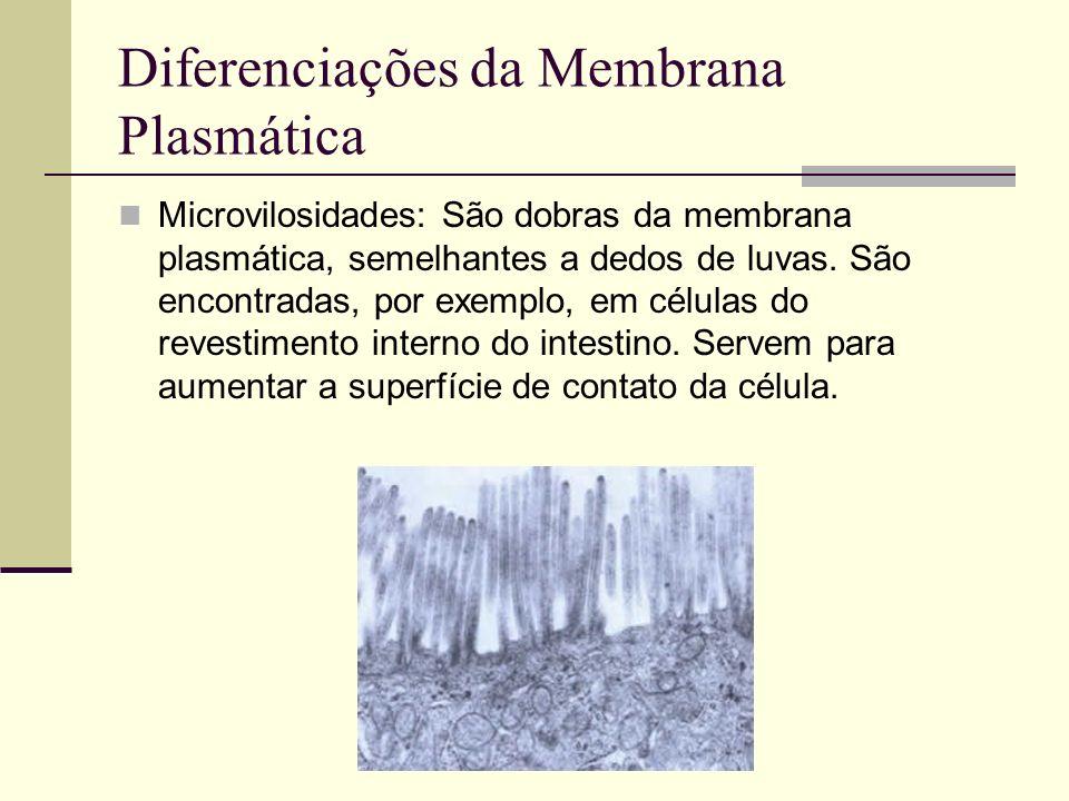 Diferenciações da Membrana Plasmática Microvilosidades: São dobras da membrana plasmática, semelhantes a dedos de luvas. São encontradas, por exemplo,