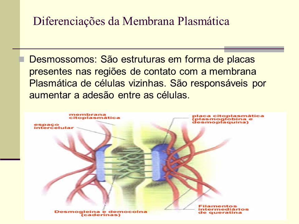 Desmossomos: São estruturas em forma de placas presentes nas regiões de contato com a membrana Plasmática de células vizinhas. São responsáveis por au
