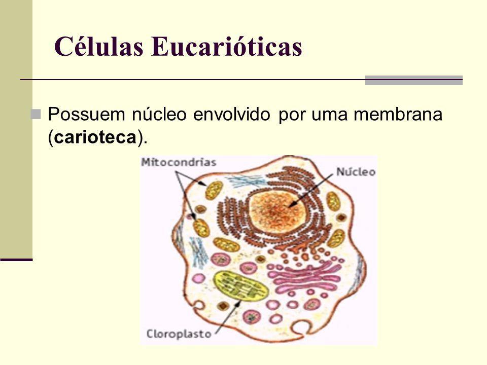 Células Eucarióticas Possuem núcleo envolvido por uma membrana (carioteca).