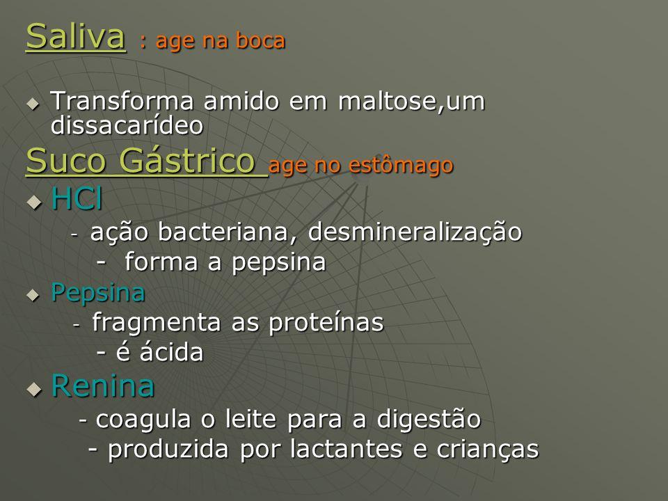 Saliva : age na boca Transforma amido em maltose,um dissacarídeo Transforma amido em maltose,um dissacarídeo Suco Gástrico age no estômago HCl HCl - a