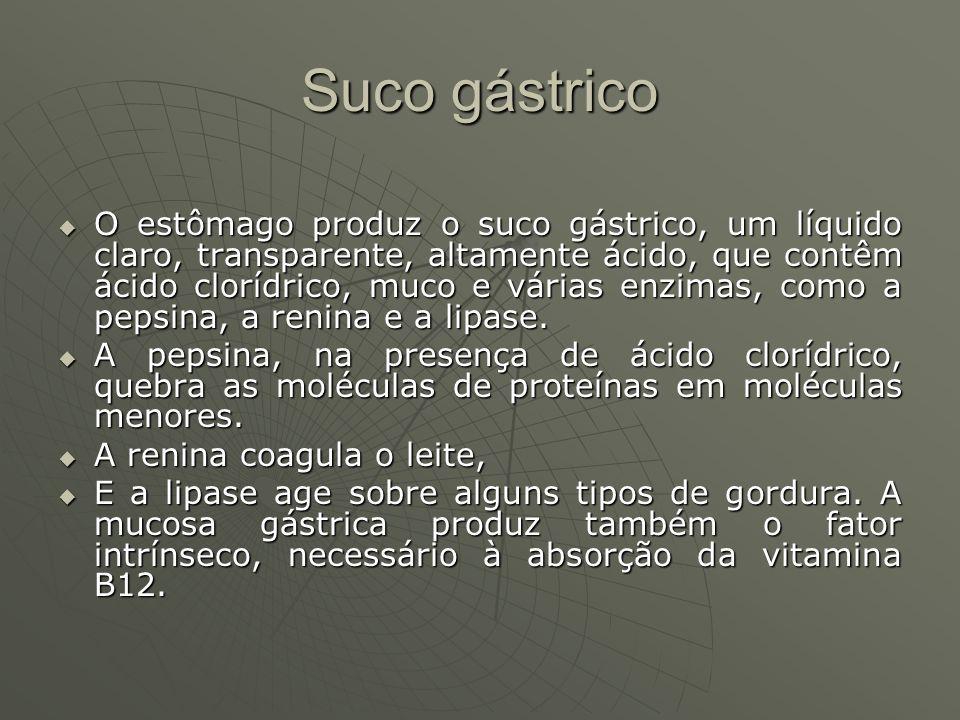 Suco gástrico O estômago produz o suco gástrico, um líquido claro, transparente, altamente ácido, que contêm ácido clorídrico, muco e várias enzimas,