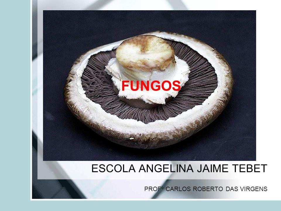 FUNGOS ESCOLA ANGELINA JAIME TEBET PROFº CARLOS ROBERTO DAS VIRGENS