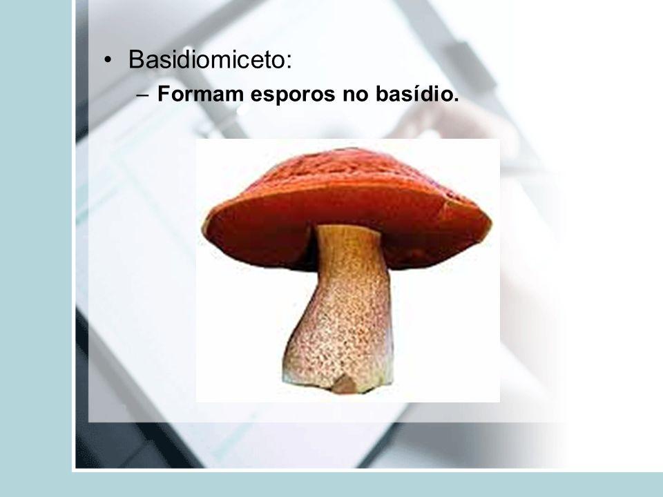 Basidiomiceto: –Formam esporos no basídio.