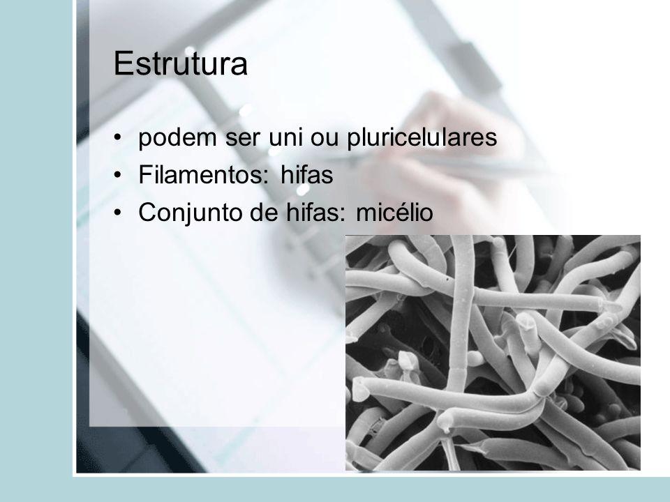 Estrutura podem ser uni ou pluricelulares Filamentos: hifas Conjunto de hifas: micélio