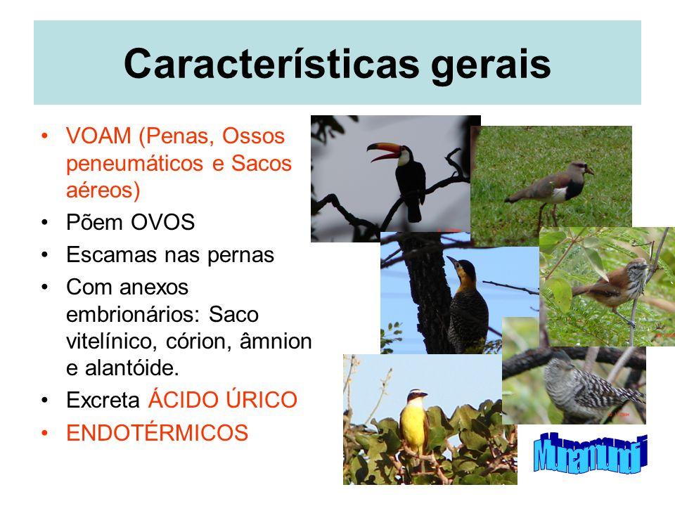 Características gerais VOAM (Penas, Ossos peneumáticos e Sacos aéreos) Põem OVOS Escamas nas pernas Com anexos embrionários: Saco vitelínico, córion, âmnion e alantóide.