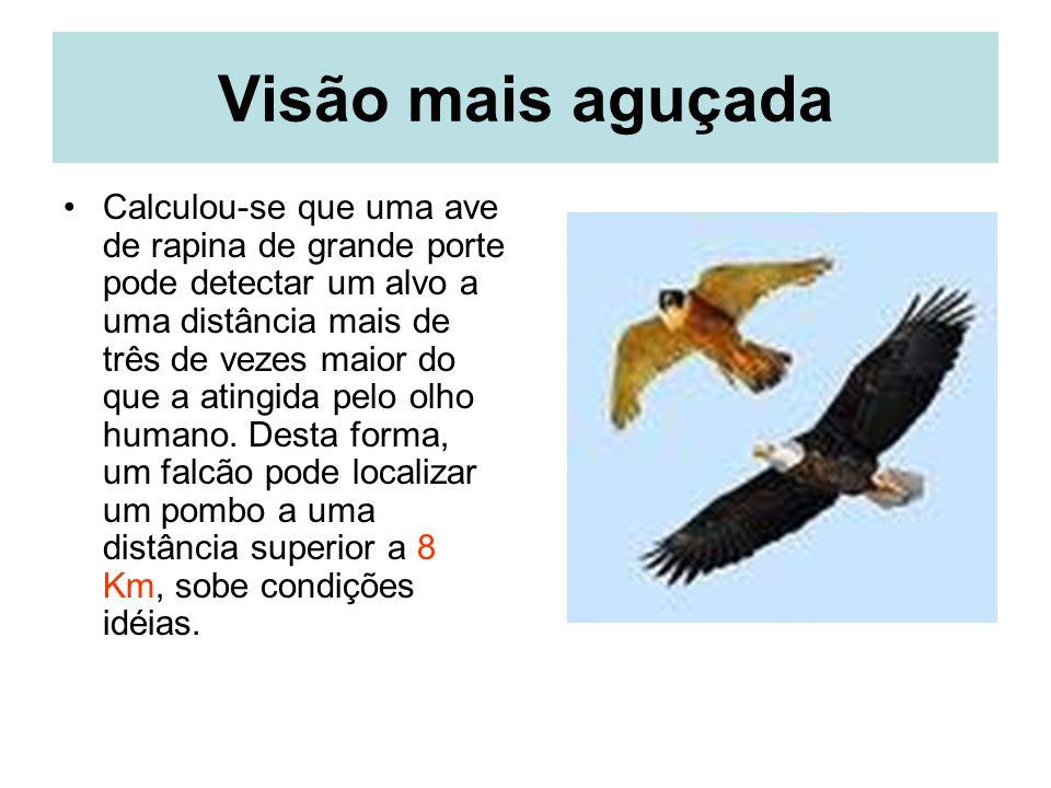 Visão mais aguçada Calculou-se que uma ave de rapina de grande porte pode detectar um alvo a uma distância mais de três de vezes maior do que a atingida pelo olho humano.