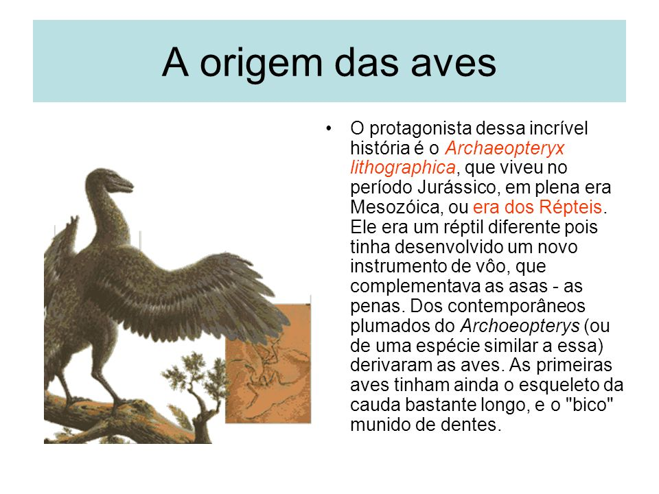 A origem das aves O protagonista dessa incrível história é o Archaeopteryx lithographica, que viveu no período Jurássico, em plena era Mesozóica, ou era dos Répteis.