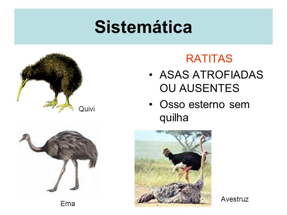 Maior ovo e Menor ovo O ovo do avestruz possui normalmente de 15 a 20 cm de comprimento, 10 a 15 cm de diâmetro e pesa entre 1,0 e 1,78 Kg.