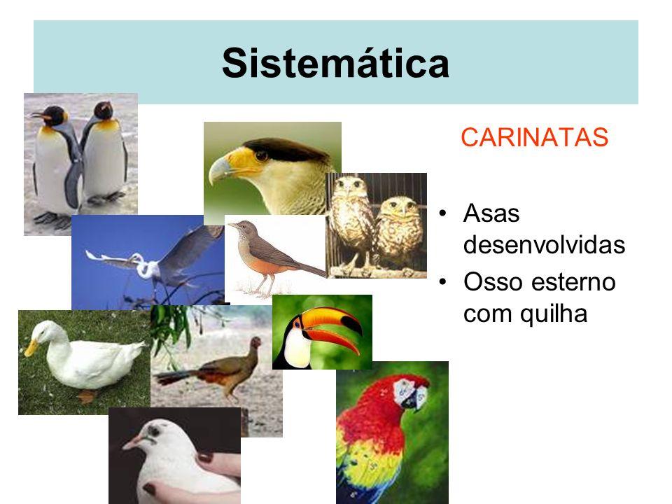 Sistemática CARINATAS Asas desenvolvidas Osso esterno com quilha
