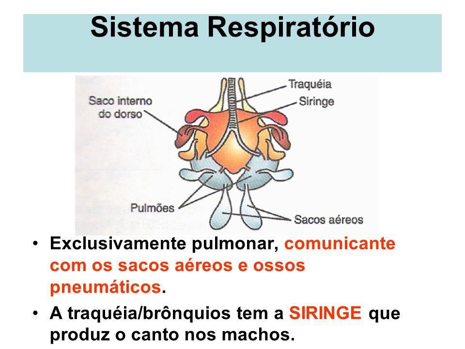 Sistema Circulatório Completo (sangues V / A não se misturam x HOMEOTERMIA), Duplo e Fechado.