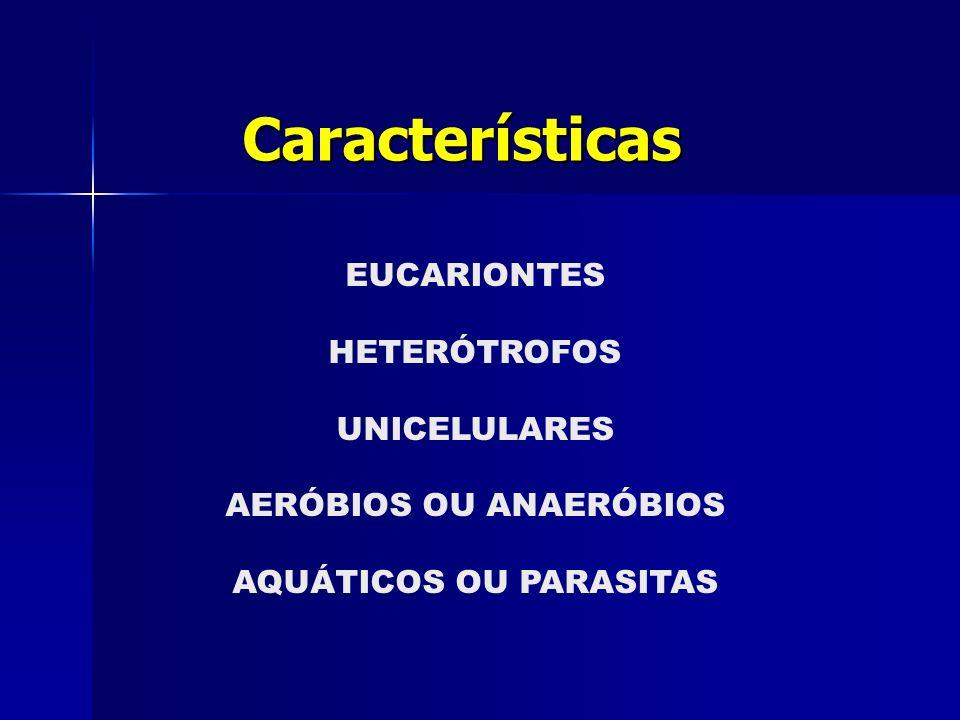 EUCARIONTES HETERÓTROFOS UNICELULARES AERÓBIOS OU ANAERÓBIOS AQUÁTICOS OU PARASITAS Características