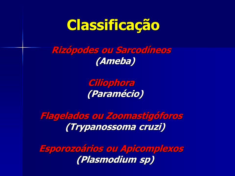 Rizópodes ou Sarcodíneos (Ameba) (Ameba)Ciliophora (Paramécio) (Paramécio) Flagelados ou Zoomastigóforos (Trypanossoma cruzi) (Trypanossoma cruzi) Esporozoários ou Apicomplexos (Plasmodium sp) (Plasmodium sp) Classificação