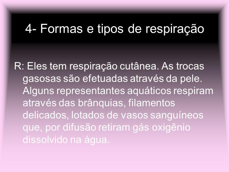 4- Formas e tipos de respiração R: Eles tem respiração cutânea. As trocas gasosas são efetuadas através da pele. Alguns representantes aquáticos respi