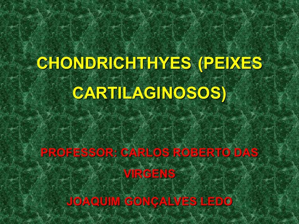 CHONDRICHTHYES (PEIXES CARTILAGINOSOS) PROFESSOR: CARLOS ROBERTO DAS VIRGENS JOAQUIM GONÇALVES LEDO