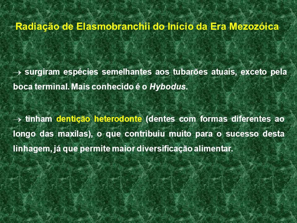 Radiação de Elasmobranchii do Início da Era Mezozóica surgiram espécies semelhantes aos tubarões atuais, exceto pela boca terminal. Mais conhecido é o