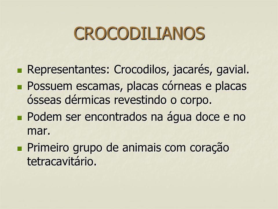 CROCODILIANOS Representantes: Crocodilos, jacarés, gavial. Representantes: Crocodilos, jacarés, gavial. Possuem escamas, placas córneas e placas óssea
