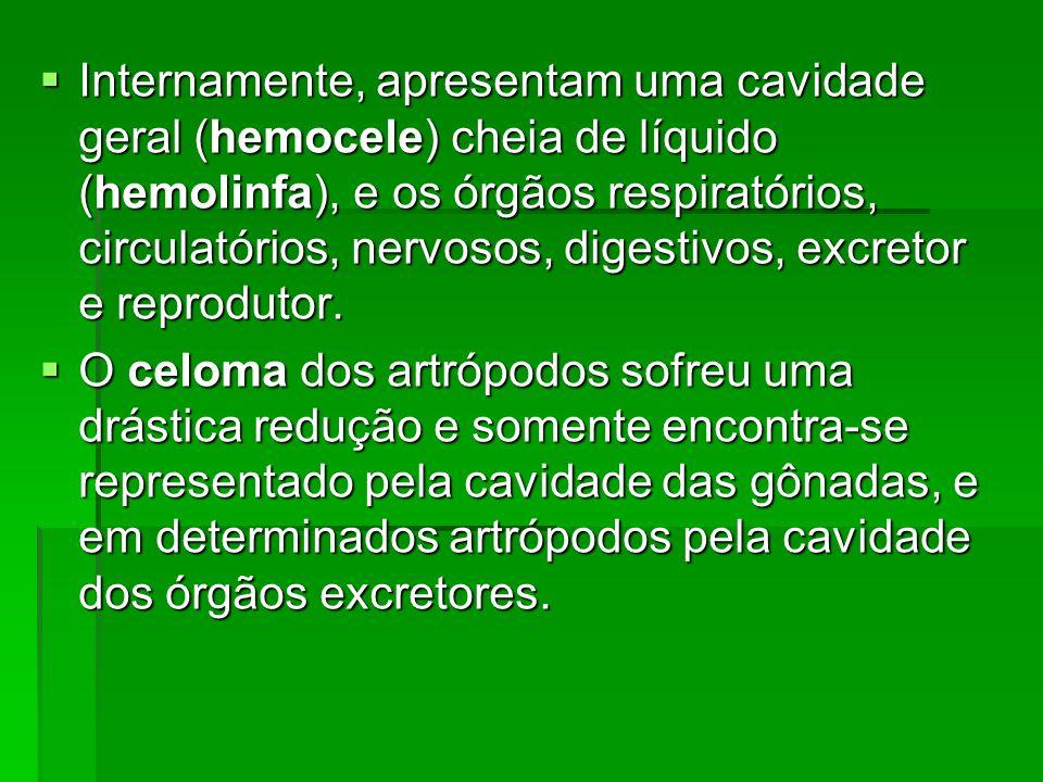 Internamente, apresentam uma cavidade geral (hemocele) cheia de líquido (hemolinfa), e os órgãos respiratórios, circulatórios, nervosos, digestivos, e